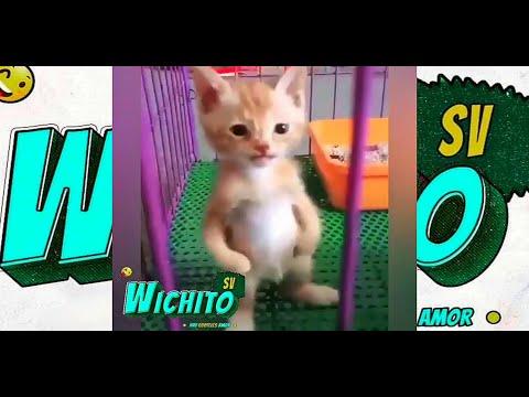 Wichito SV - (27 De Mayo 2020)