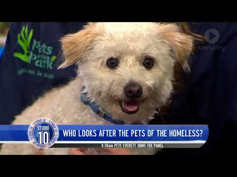 Helping Look After The Pets Of The Homeless  | Studio 10
