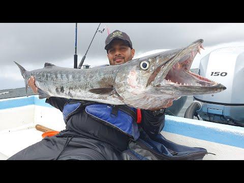 DEEP SEA HANDLINE FISHING - HUGEEE BARRACUDA CAUGHT - 25 Miles Offshore - Trinidad, Caribbean