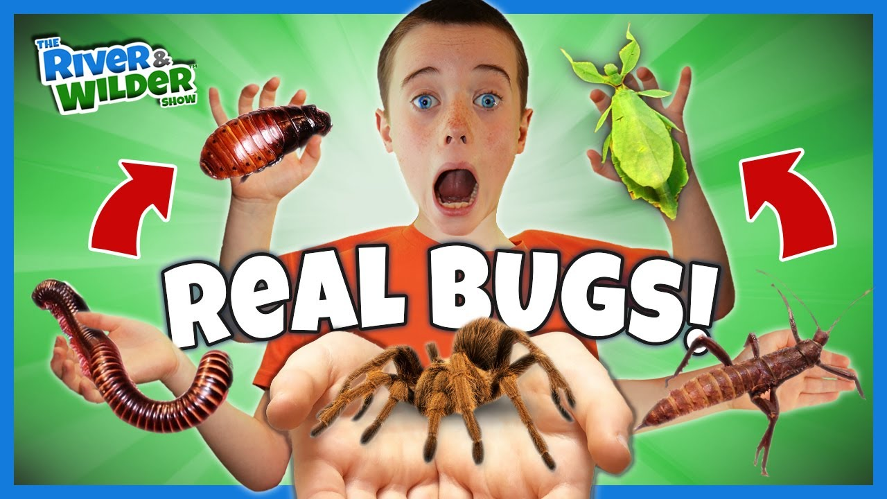Download Playing with GIANT BUGS and a TARANTULA??