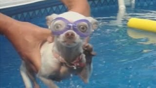 Dogs Love Swimming: Compilation