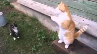 Особенности приколов с русскими кошками  Улетный ржач