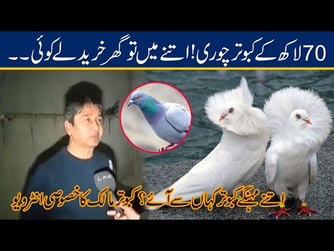 Exclusive ! 70 Lac Pigeon Stolen l CCTV Of Robbery