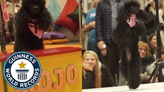 Mojo: The ballet dancing dog! - Meet The Record Barkers
