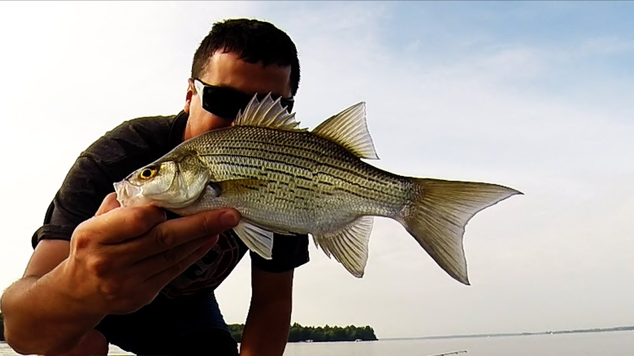 Fishing castle rock wisconsin youtube for Wisconsin out of state fishing license