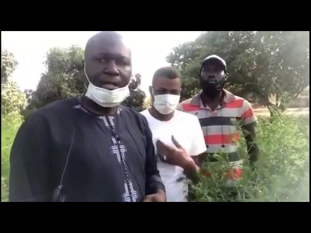 Visite des champs d'Artemisia au Sénégal
