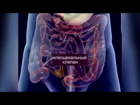 Гинекология. Консультация гинеколога. Справочник вопросов