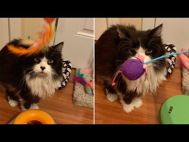 Grump Cat Doesn't Want To Play