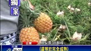 新品種鳳梨「紅金龍」 比金鑽大兩倍-民視新聞