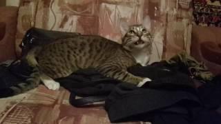 Прикол с котом.Улыбающийся кот...