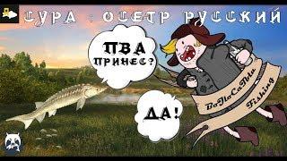 Русская Рыбалка 4 : Сура - Осетр Русский : Д - ДОХОД!