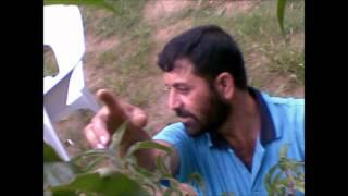 Jamil Kiani-Dammni Rawalakot