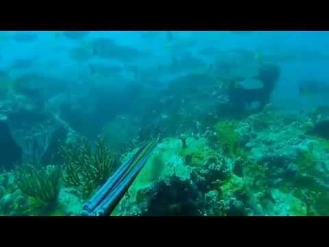 Spearfishing St Thomas