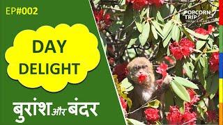 Life of Monkeys 🐒 & Rhododendron 🌲 Beautiful Uttarakhand