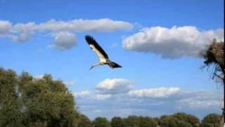 Volando voy -  Jorge Drexler