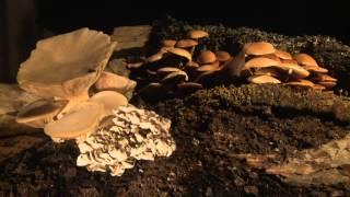 MushroomsTimelapsefootage