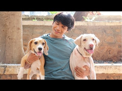 DOG SHORT FILM | SMALL POCKET | BEAGLE || MOHAK MEET