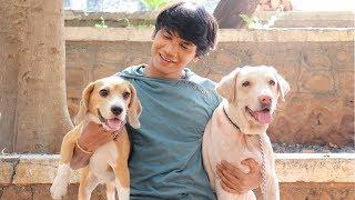 DOG SHORT FILM | SMALL POCKET | BEAGLE || MOHAK MEET || SEEMA