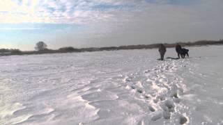 Озеро Банное Браконьерство