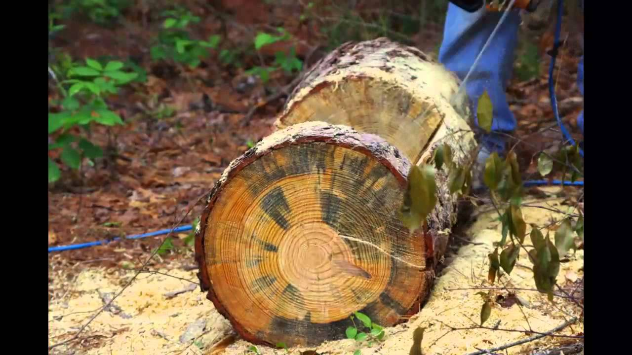 Making A Tree Trunk Planter