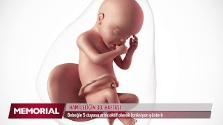 30 haftalık gebelik döneminde neler oluyor?