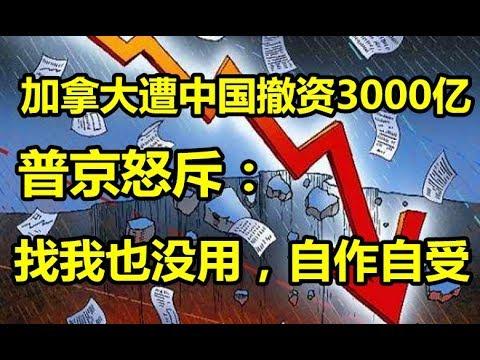 加拿大遭中国撤资3000亿!普京怒斥:找我也没用,自作自受!