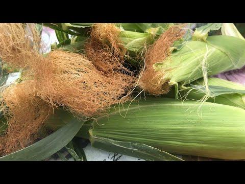 Сладкая Кукуруза. Все что нужно знать о кукурузе. Лайфхак