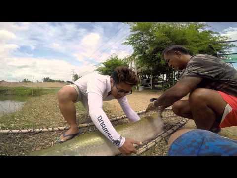 Fishing Traveler- arapaima fishing in Thailand
