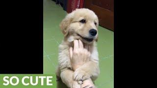 ナデナデされる子犬「この腕は離さないワン!」(動画)