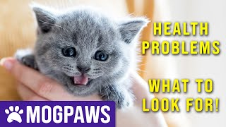 What Health Problems Do British Shorthair Cats Have?