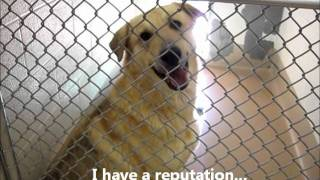 """hercules"" -- Adoptable Dog At Collin County Animal Services  (video 2)"