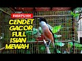Cendet Istimewa Cendet Gacor Full Isian  Mp3 - Mp4 Download