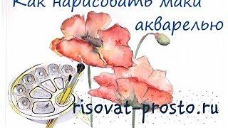 Как нарисовать цветы-маки акварелью. Уроки рисования цветов для начинающих