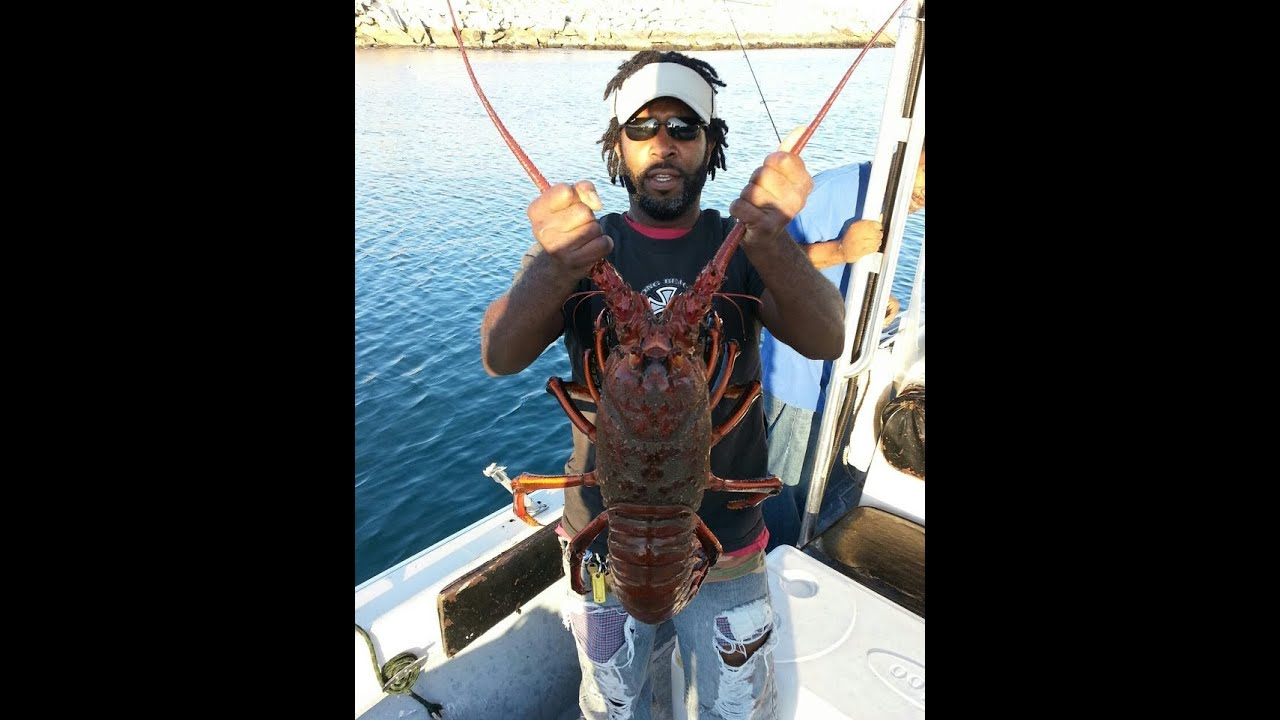 Southern california lobster fishing good youtube Long beach fishing spots