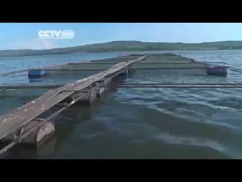 974 CCTV Cage Fish Farming In Uganda