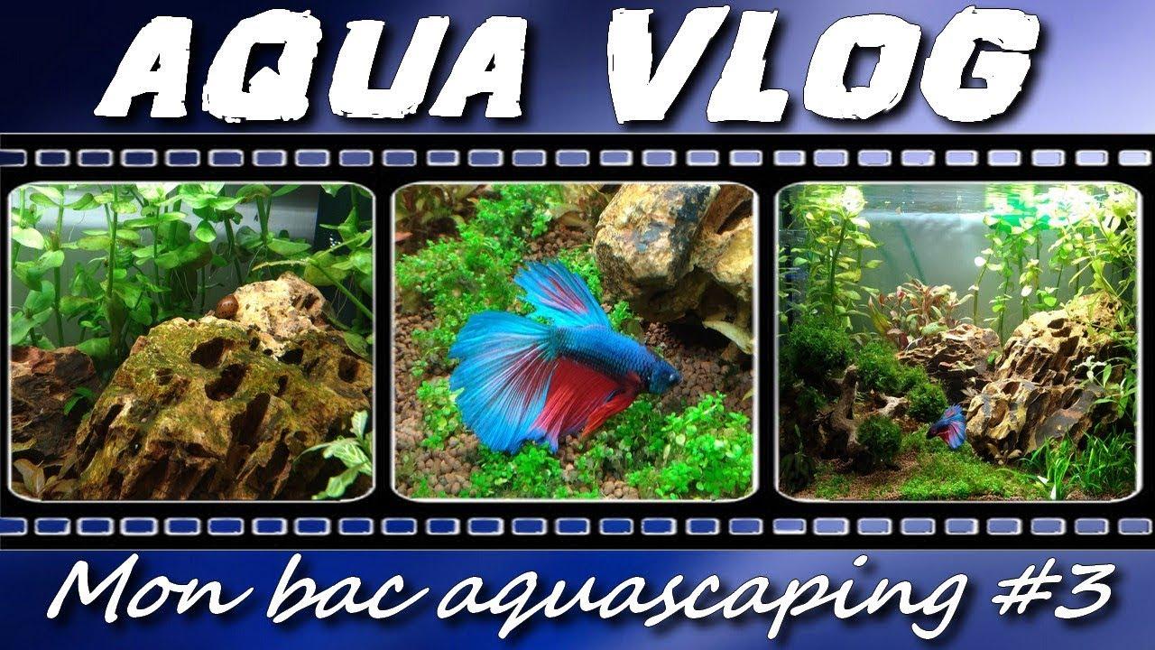 Introduction Poissons Bac 60 Litres Aqua Vlog Youtube