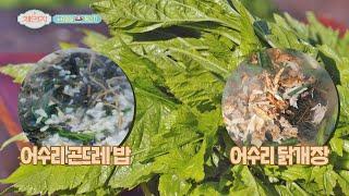 어수리 나물로 향과 맛 up↗ 자연 건강 밥상! 체인지…