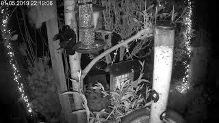 Vogelvoerplaats in Amerongen - Vereniging voor Dorp en Natuur Amerongen Leersum