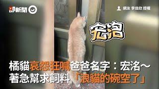 橘貓哀怨狂喊爸爸名字:宏洺!見「浪貓的碗空了」著急幫求飼料|寵物|貓咪|說人話