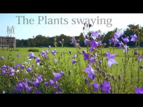 【RX100M4】植物ゆらゆら / The Plants swaying