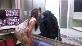 Great Ape Trust: Sara Gruen Video