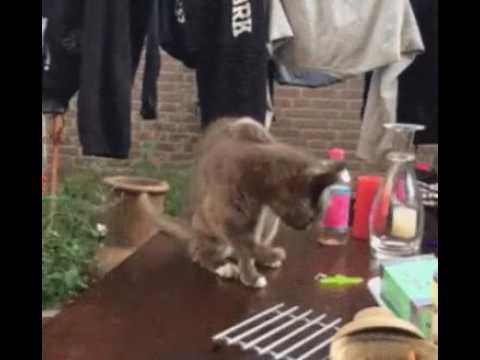 Как наебать кота