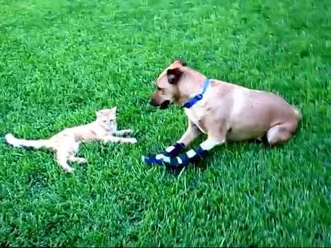 Feral cat loves rescue dog