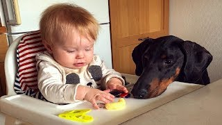 Beautiful Doberman dog and Baby Become Best friends | Dog loves Baby Compilation