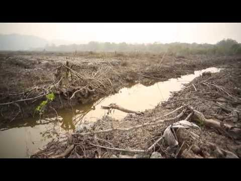 Documentary: Kalimantan - Saving the Forest for the Future