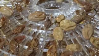 Как сделать изюм, чернослив, сушеные груши? Как у нас в Анапе)))