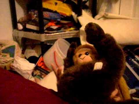 monkey porno