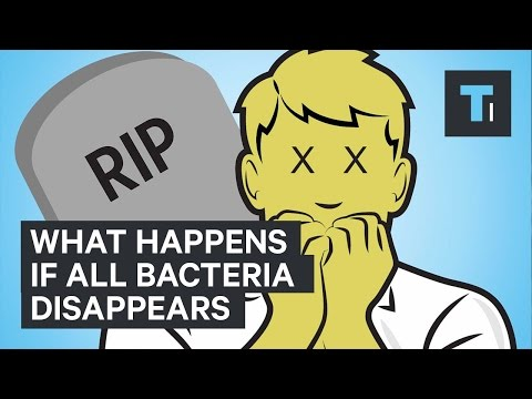 What happens if all bacteria disappears