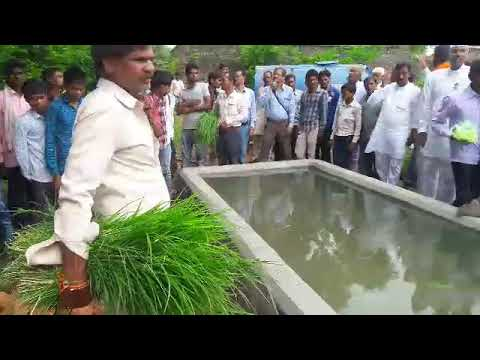 Launch of cow shelter by feeding cow and paddy and fodder