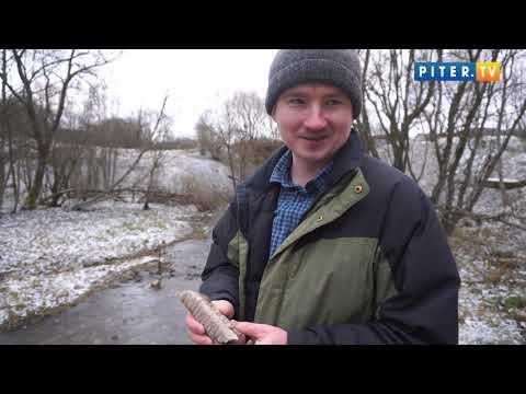 Piter.tv увидел, кто ищет и находит доисторические реликвии в Петербурге